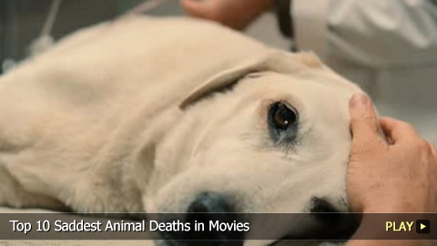 Top 10 Saddest Animal Deaths in Movies