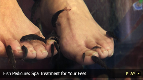 Fish Pedicure: Spa Treatment for Your Feet