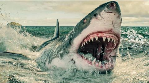 Top 10 Most Horrific Shark Attacks That Actually Happened