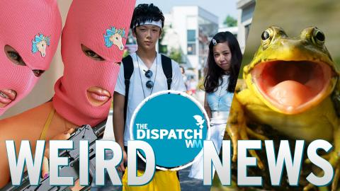 Sex Burglars, Virgin Epidemics & Puking New Ants: The Dispatch #36