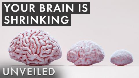 What If Human Brains Were Half the Size?