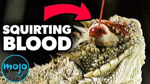 Top 10 Creepy Animal Facts That Will Keep You Up at Night