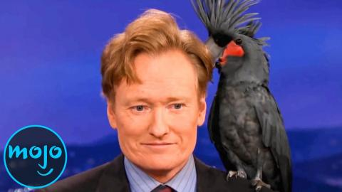 Top 10 Funniest Animal Moments on Talk Shows