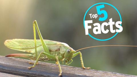 Top 5 Facts About Eating Bugs