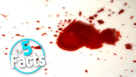Top 5 Lethal Facts about BLOOD!!